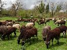 https://www.lacicala.org/immagini_news/22-07-2019/finanziamenti-per-agricoltura-sociale-turismo-e-filiera-corta-pubblicati-i-bandi-del-gal-100.png