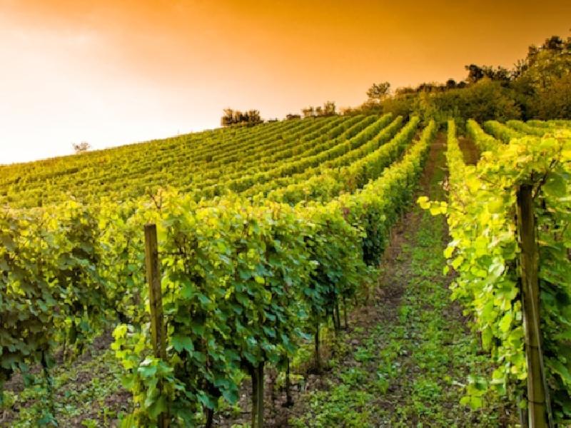 https://www.lacicala.org/immagini_news/24-05-2019/frascati-festa-del-vino-ospitale-600.png