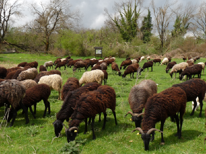 https://www.lacicala.org/immagini_news/25-07-2019/finanziamenti-per-agricoltura-sociale-turismo-e-filiera-corta-pubblicati-i-bandi-del-gal-600.png